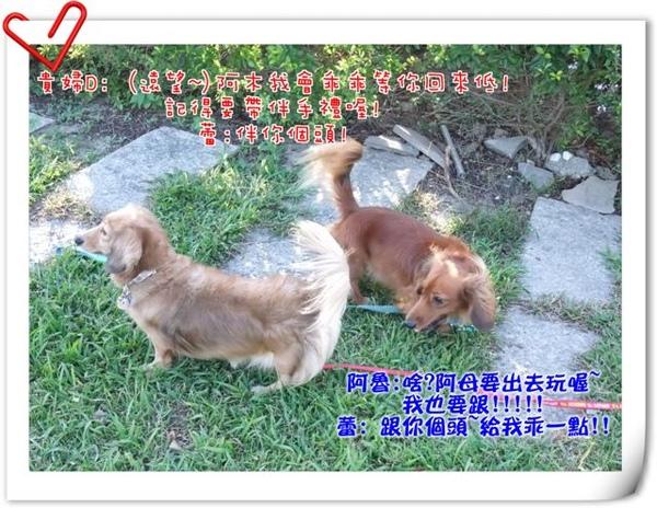 2008_11290338.jpg