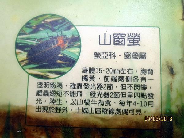民國102.05.05土城南天母承天禪寺桐花季 (3).jpg