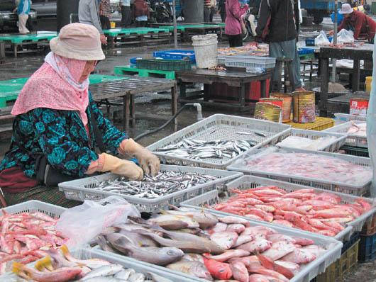 辛勞漁家婦 澎湖海鮮美味靠她們103.05.28 (1)
