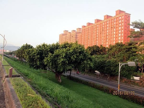 民國105.08.20大漢溪左岸自行車道板橋到樹林段 (6).jpg