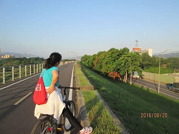 民國105.08.20大漢溪左岸自行車道板橋到樹林段 (25).jpg