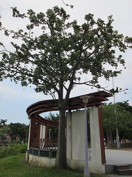 107.07.09板橋溪北公園奇特的樹 (10).jpg