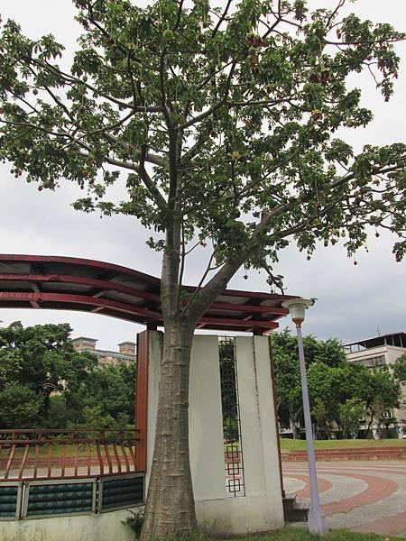 107.07.09板橋溪北公園奇特的樹 (11).jpg