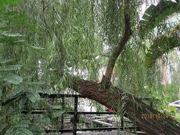 107.10.24台北西門町走路到孫運璿紀念館與植物園 (66).jpg