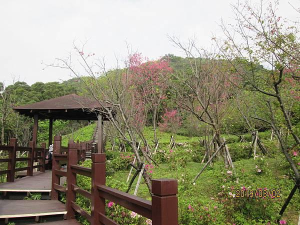 108.03.02樹林南寮福德宮附近散步 (29).jpg