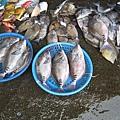 1公斤200元 很想買 可是不會煮 也不知是什麼魚
