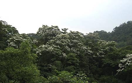 IMG_0165-1
