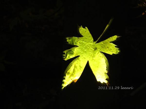 201111貝 (6)