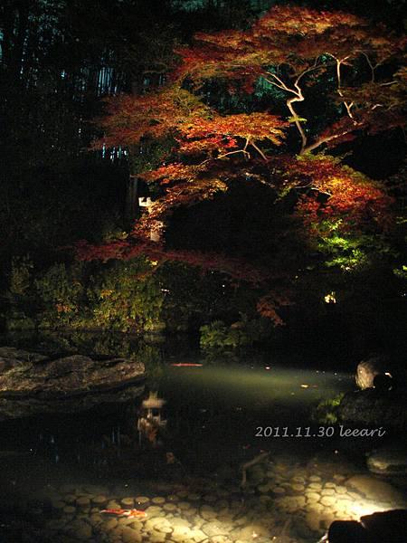 201111貝 (14)