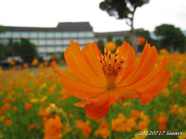 IMG_2480-052