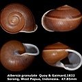 Albersia granulate 47.85mm 00.jpg