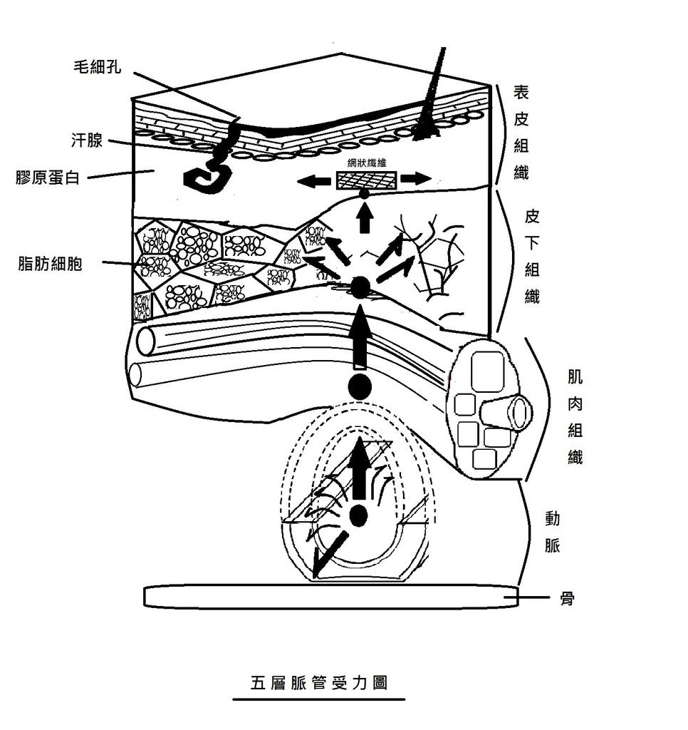 五層脈管受力圖.jpg