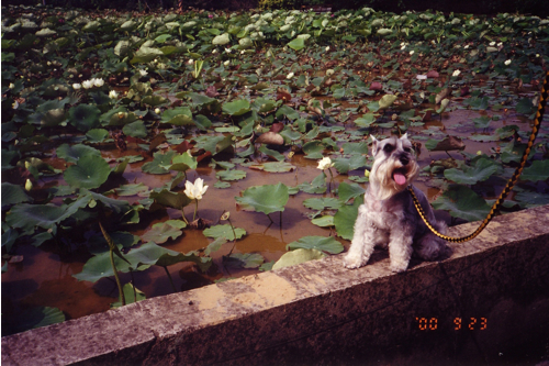 NIKO lotus.jpg
