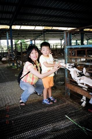 宜農羊牧場 4
