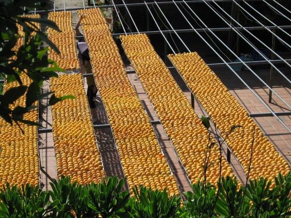 柿子日光浴區 6