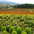 富良野花園