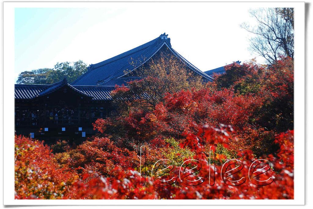20111126 東福寺 14.jpg
