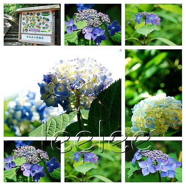 2012-06-19 鎌倉88