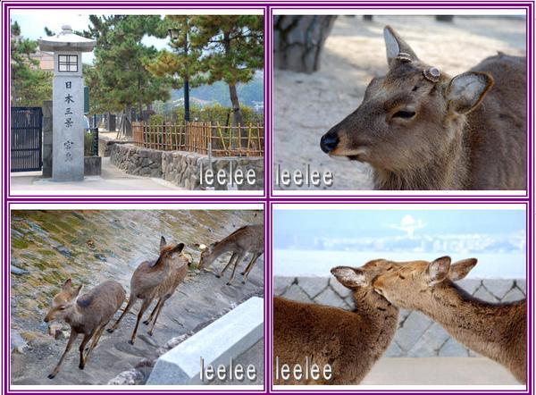 2009-04-26廣島‧小鹿‧原爆圖片2.JPG