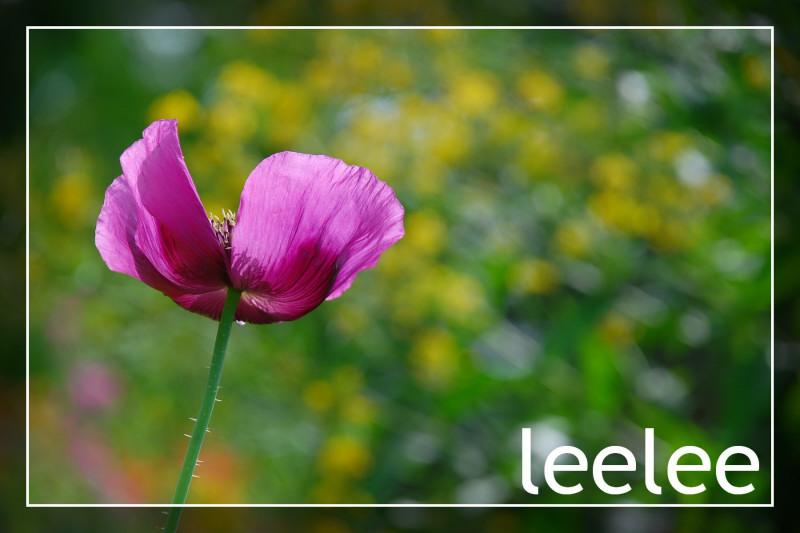 2010-01-28 2009 細味巴黎-莫內花園008_1.JPG