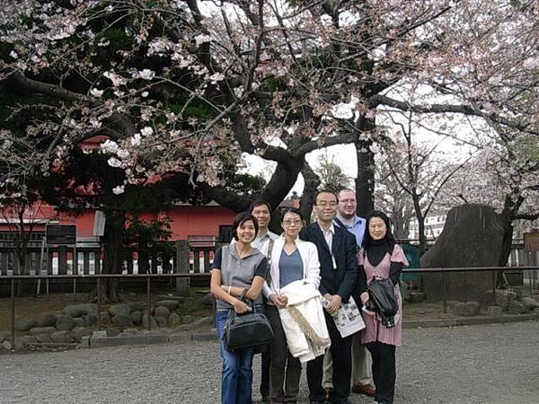 靖國神社-早春的櫻花