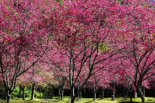 奧萬大國家森林遊樂區.jpg