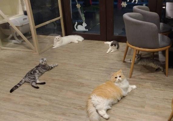 和貓咪有約1.jpg