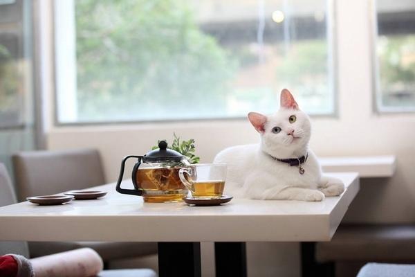 讀貓園貓咪中途咖啡.jpg