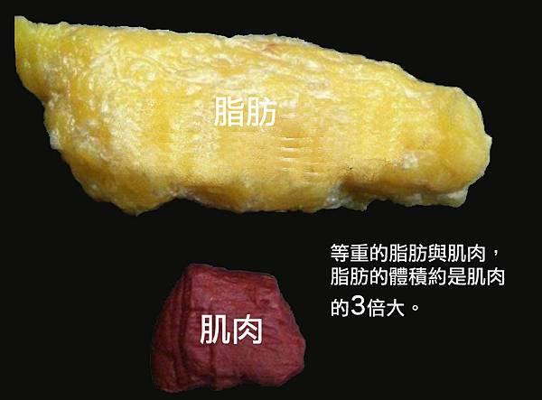 Fat & Muscle Comparison.jpg