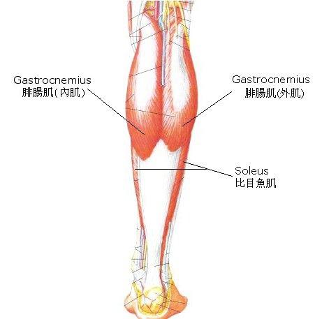 肌肉4.jpg