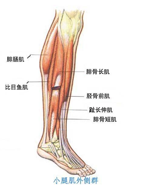 肌肉5.jpg