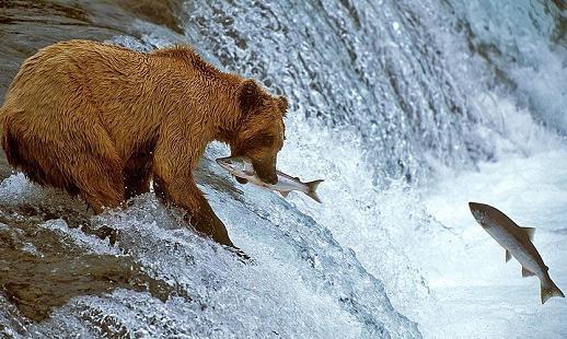 鮭魚3.jpg