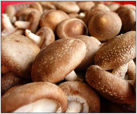 香菇.jpg