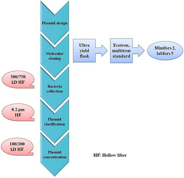Process of gene cloning and E-coli collection, clarification & concentration  .jpg