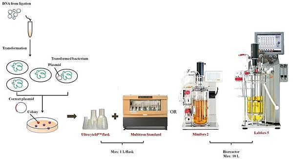 Porcess of gene cloning and E-coli culture-2.jpg