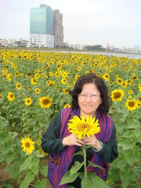 盛放於冷冬中的向日葵.JPG