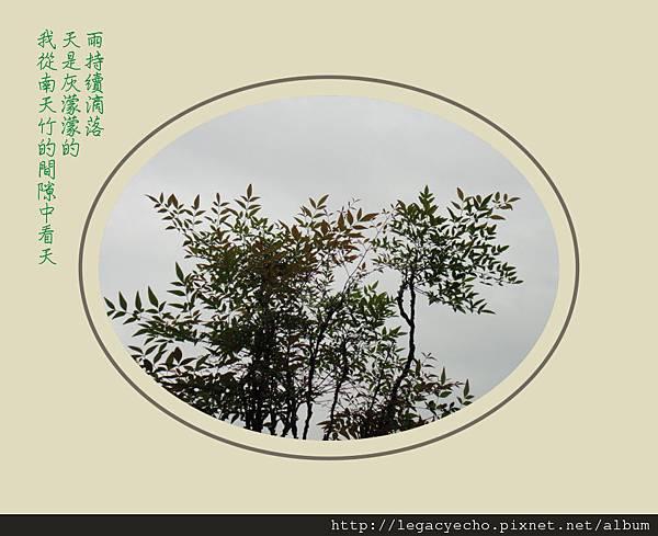 DSC04073 (2)