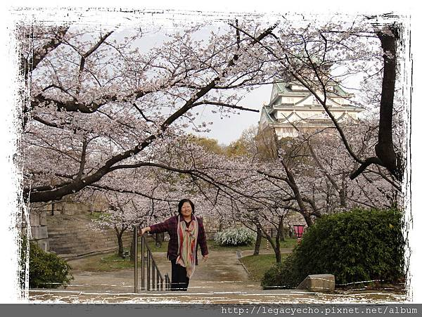 走出櫻花林