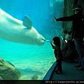 白海豚03.jpg