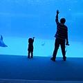 和海豚跳舞00.jpg