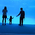 和海豚跳舞01.jpg
