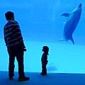 和海豚跳舞02 .jpg