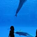 和海豚跳舞05.jpg