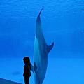 和海豚跳舞03.jpg