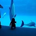 和海豚跳舞06.jpg
