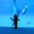 和海豚跳舞07.jpg