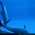和海豚跳舞09.jpg