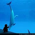 和海豚跳舞08.jpg