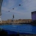 海豚表演02.jpg
