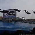 海豚表演01.jpg